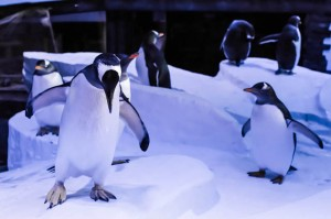 J & E Hall celler cooling system helps penguins in Hull.